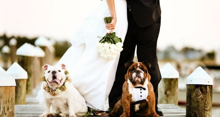 Pet Lovers - Wedding Stories